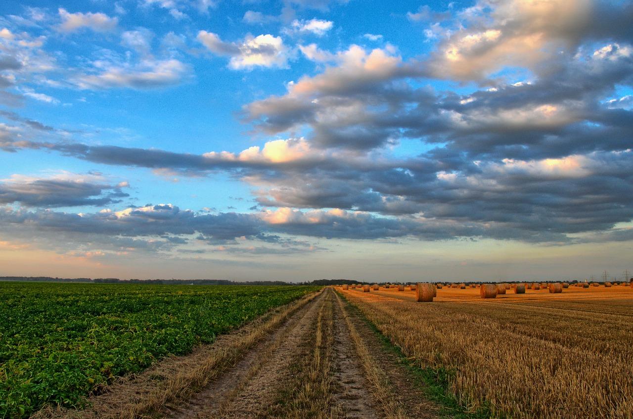 Oferta hal rolniczych