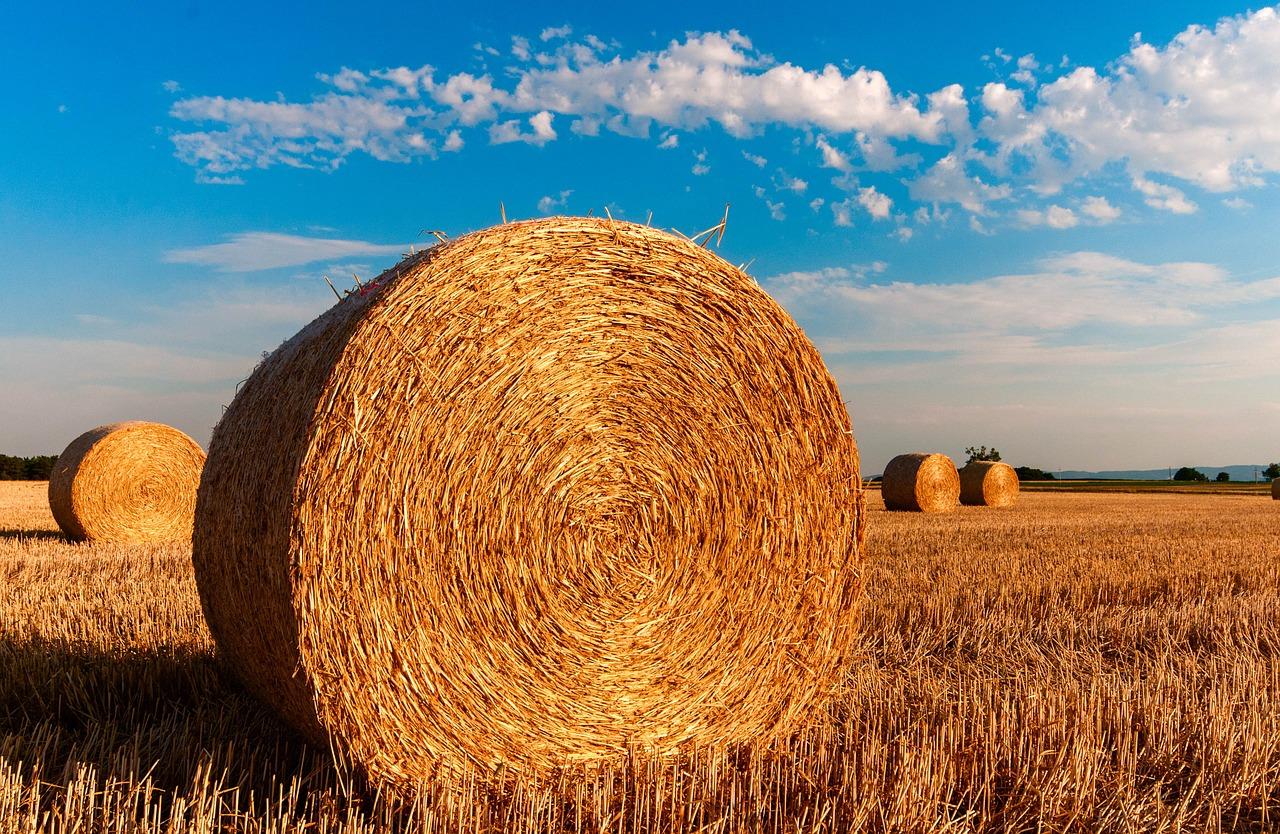Namioty rolnicze całoroczne